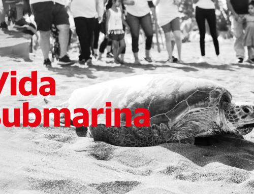 El compromiso de Nuvoil para salvar de la extinción a la tortuga marina verde